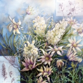 Pam Sackville Grevilleas Flannel Flowers 2014