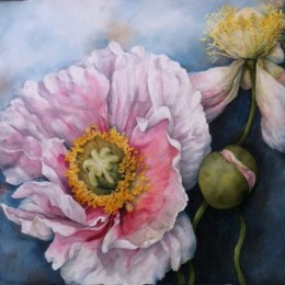 Pam Sackville Poppies 2 2014
